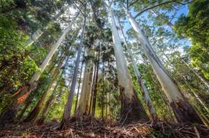 Door de bomen het bos weer zien door een VA